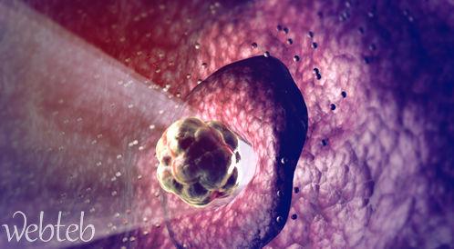 الحمل الشهر الأول fetusdevelopment_fet
