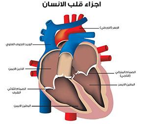 ما هو امراض القلب