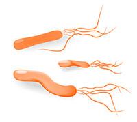 كل شيء عن الجرثومة المَلْوِيَّة البَوابية (Helicobacter Pylori)