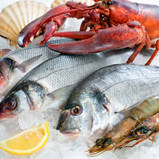 الاسماك ومنتجات المحار