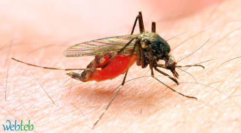 موافقة أوروبية على تطعيم ضد الملاريا