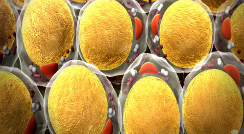 اكتشاف خلايا دهنية في أنسجة النخاع العظمي