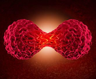 باحثون أمريكيون نجحوا بتحويل خلايا سرطانية الى خلايا طبيعية
