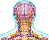 التهاب الشريان الصدغي يزيد من خطر فشل الغدد الكظرية