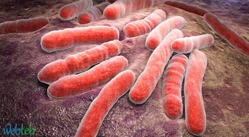 العدوى البكتيرية وضعف  وظيفة الكبد وخطر الموت لدى مرضى تليف الكبد والاستسقاء