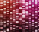 جائزة نوبل في الكيمياء لثلاثة علماء اكتشفوا آليات إصلاح الحمض النووي في الخلية