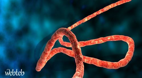 منظمة الصحة العالمية ضد حظر السفر إلى الدول الموبوءة بفيروس الايبولا