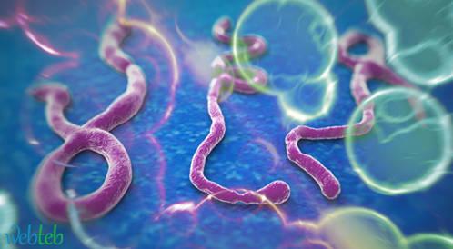 يبقى فيروس الايبولا على قيد الحياة في الخلايا المنوية أكثر من نصف سنة