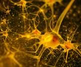 مثبطات منظومة رنين انجيوتنسين تبطئ من التدهور الإدراكي