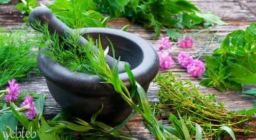 دراسة تكشف عن مادة في الأعشاب تعزز عمل الدماغ