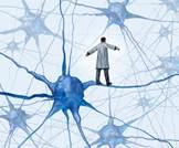 هنالك انخفاض في التكامل والتباين لشبكة المحاكاة لدى مرضى التوحد