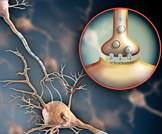 باحثون يكتشفون فروقا في تركيب الناقل العصبي في أوساط المصابين بالتوحد