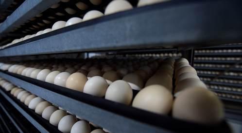 حظر سعودي مؤقت على لحوم الدواجن ومنتجاتها من مناطق فرنسية