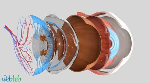 معدلات الجراحة المتكررة وانفصال الشبكية بعد جراحة الثقب البقعي