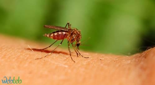 فيروس زيكا الجديد هل هو الخطر القادم؟