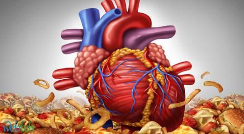 تزيد الأنسجة الدهنية في القلب مع التقدم في السن، ويؤثر الـ BMI على وزن القلب