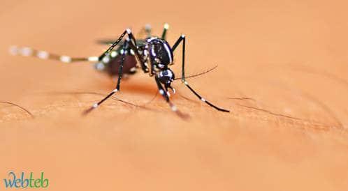 الصحة العالمية: القضاء على فيروس زيكا صعب حالياً