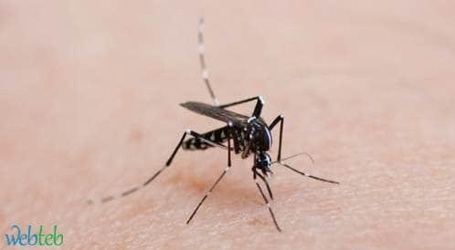 مختصون أمريكيون يؤكدون العلاقة بين فيروس زيكا وتشوهات الأجنة