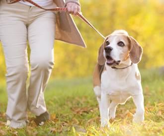 التنزه مع الكلاب يفيد صحة كبار السن