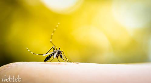 اليوم العالمي للملاريا- لا وفيات بالمرض في السعودية