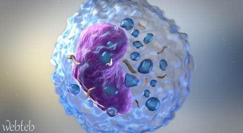 هل ترفع البكتيريا من خطر الإصابة بالسكري من النوع الأول؟