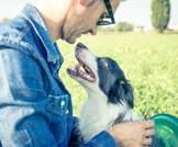 ما هو دور الكلاب في السيطرة على مستوى السكر في الدم؟