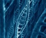 اكتشاف جينات مسؤولة عن الإصابة بالسكري النوع الثاني