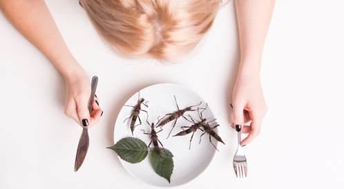 الحشرات هل هي طعام المستقبل؟