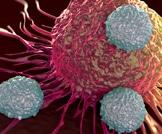 الصيام يحد من تطور نوع شائع من سرطانات الدم
