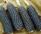 تناول الذرة الزرقاء قد يحارب المتلازمة الأيضية والسكري!