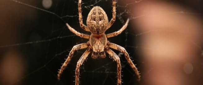 تقنية جديدة وغير متوقعة لعلاج الخوف من العناكب