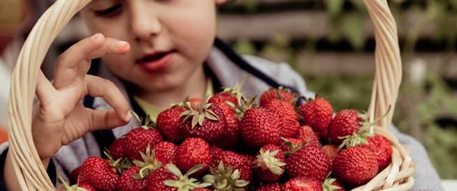 تعرض الأولاد لمبيدات الحشرات قد يسبب البلوغ المبكر!