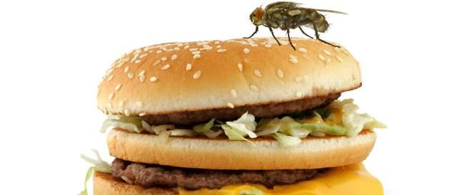 هذا ما يحدث عندما يحط الذباب على طعامك