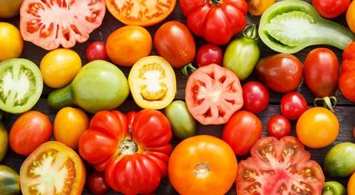 الطماطم قد تكون الامل