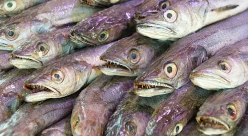 منشور يساعد في التفرقة بين السمك الطازج وغير الطازج