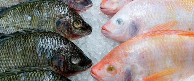 هل الأسماك المجمدة مفيدة كما الطازجة؟