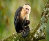 جدري القرود النادر يعود للواجهة مجددًا