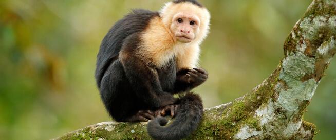 فيروس جدري القرود النادر يصيب مواطنًا أمريكيًّا
