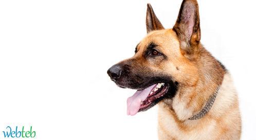 """الكلب """"فرانكي"""" يشخص سرطان الغدة الدرقية"""
