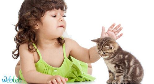دراسة: القطط قد تصيبكم بالعمى!