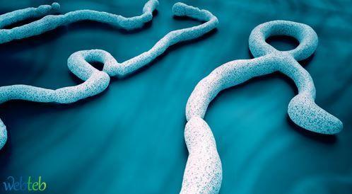 بالصور: تعرفوا على فيروس الايبولا!