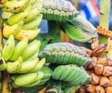 فوائد قشر الموز العجيبة!