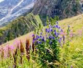 نباتات تنمو في الجبال