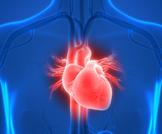 قلب الإنسان بالصور