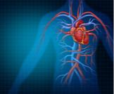 الأوعية الدموية بالصور