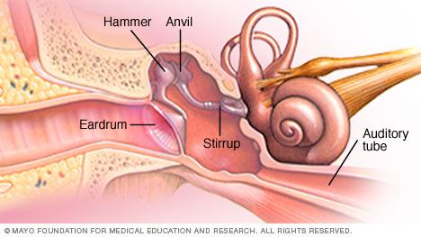 عظام الأذن الوسطى