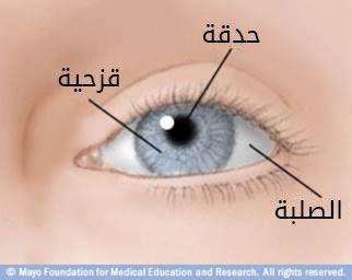 الجزء الأمامي من العين