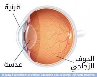 العين الداخلية