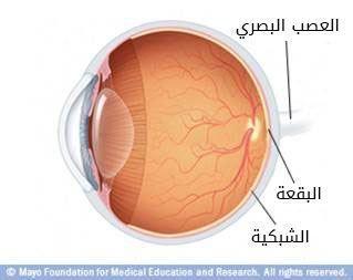 الجزء الخلفي من العين