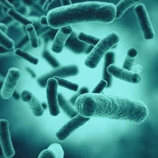 البكتيريا